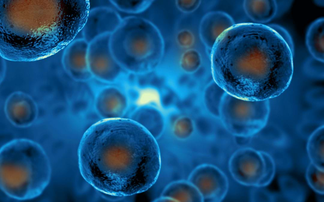 HOW STEM CELLS DIFFER FROM NORMAL BODY CELLS?