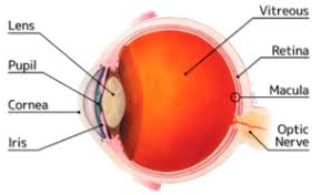 Stem cells: An Eye-Opener For Age Related Macular Degeneration