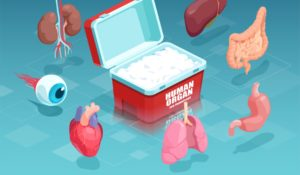 Can Stem Cells Replace The Human Organ Transplantation?
