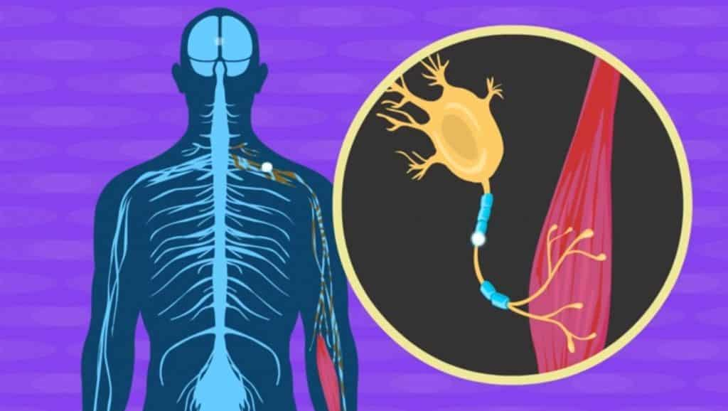 Amyotrophic Lateral Sclerosis Treatment