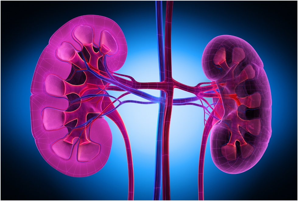 Diabetic Nephropathy- How Can Stem Cells Help